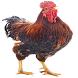 2017 Chicken On Screen Prank