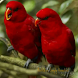 1000+ Birds Wallpapers by PGL Apps