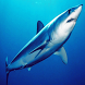 Sharks of the World 2 FREE by Appa Apps