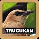 Masteran Kicau Burung Trucukan by Juns Project