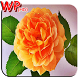 Wallpaper Flower For Free by apphappydee2015