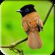 Bird Wallpaper by AlfarezqiApps