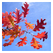 Autumn - Wallpaper Collection by Hojasoft, LLC