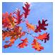 Autumn - Wallpaper Collection by Hojasoft, LLC