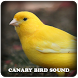 Canary Bird Sound by Ralph Studio