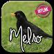 canto pássaro preto (melro) by Tahu Bulat App