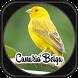 Canto de Canário Belga by jsmedia app