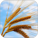 Plains of Wheat Live Wallpaper by Wallpaper Joy