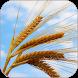 Plains of Wheat Live Wallpaper by Wallpaper Joy