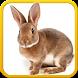 Pet Bunny Rabbit 3d Simulator by Otto Games Studio