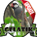 Masteran Kicau Gelatik by EdukaPlay
