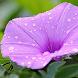 Flower 3D for Live Wallpaer