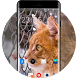 Theme for Karbonn K25i Kitty Wallpaper by Launcher theme