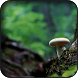 Mushroom Wallpapers by HAnna