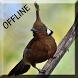 Suara Burung Cililin Master by Detarp Creative