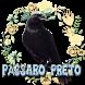 Pássaro Preto Canto Mateiro Mineiro by Raja Burung App