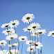 Flowers Blue Sky Wallpapers by fedorcherepovich