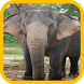 Elephant wallpaper by Peanut