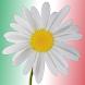 Pizzeria La Margherita by Bizab Software