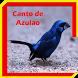 Canto de Azulao