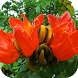 Tulip Tree Live Wallpaper by MimaWp
