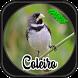 CANTO DE COLEIRO NEW by jsmedia app