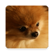 Dog Breed Game by Riva Apps