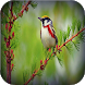 Birds wallpapers by mamosoft