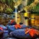 Autumn Live Wallpaper Free by minatodev