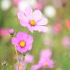 Flower Gif For Live Wallpaper