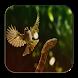 Kumpulan Kicau Trucukan by Silalahi App