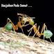 Keajaiban Pada Semut by SantriStore