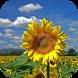 Sunflower Live Wallpaper by WpStar
