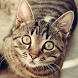 Cat Breeds - Identify Your Cat by SnD Apps, LLC