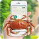 Crab in phone prank