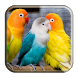 Kicau Burung Lovebird by DP Files
