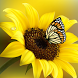 Butterfly Live Wallpapers by Latest Live Wallpapers