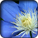 Blue flowers wallpapers by HAnna