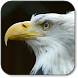 Eagle Wallpapers by Yogiapps