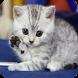 Cute Cat Wallpapers HD by Aegean Izel