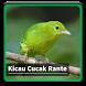 Kicau Suara Burung Cucak Rante by kangdeveloperstudio
