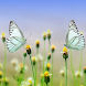 Spring Butterfly Live Wallpaper