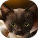 Surprised kitty live wallpaper by smyaral