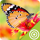 Free Butterfly Wallpapers by target lab
