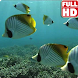 Tropical Fish Underwater Live by Andu Dun