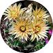 various cactus by Rani Media