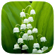 HD Wallpaper - Lily Of The Valley Flower by Wallpaper Pro