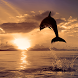 Dolphins Live Wallpapers by Latest Live Wallpapers