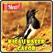 Kicau Kacer Super Gacor by Kicau Burung Dev