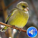 Birds Sounds Ringtones by msd developer multimedia